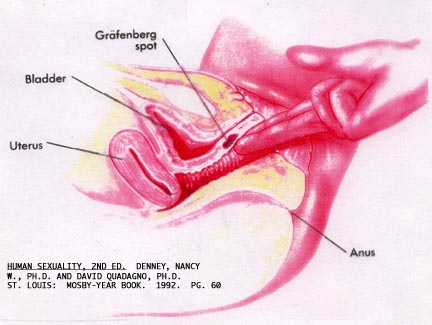 A Man's G Spot http://randomisgoodforthesoul.blogspot.com/2011/02/how-to-have-better-orgasm-for-women.html